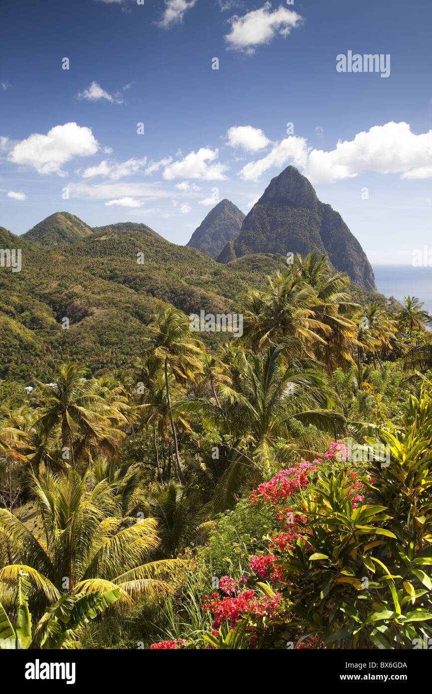 The tropical lushness of the island with the Pitons in the rear in Soufriere, St. Lucia, Windward Islands - Stock Image
