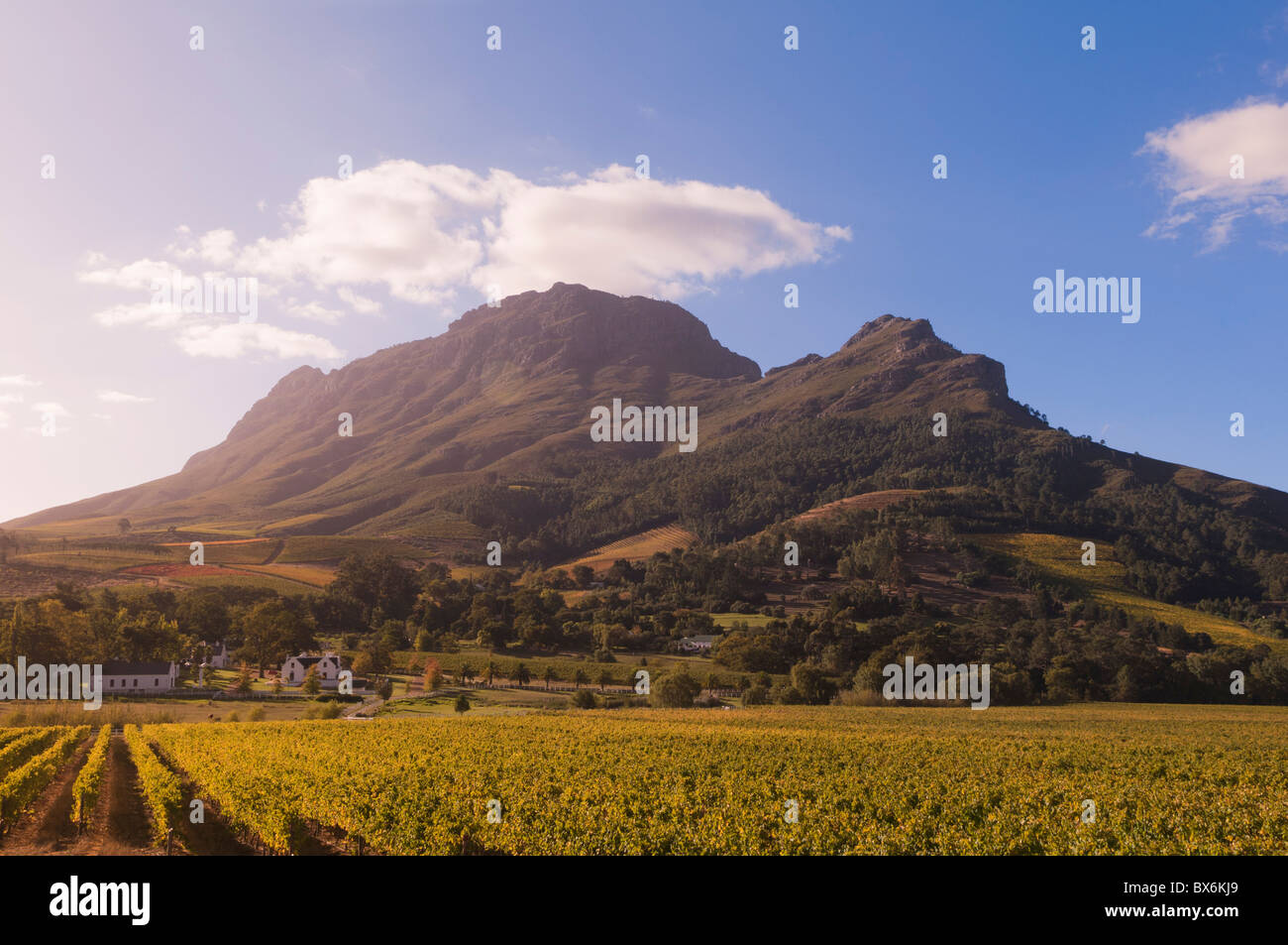 Zorgvliet Wine Estate, Stellenbosch, Cape Province, South Africa, Africa - Stock Image