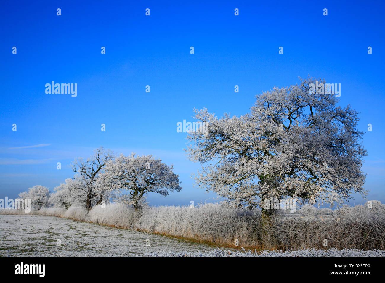 Hoar Frost on Trees Wales UK United Kingdom Europe - Stock Image