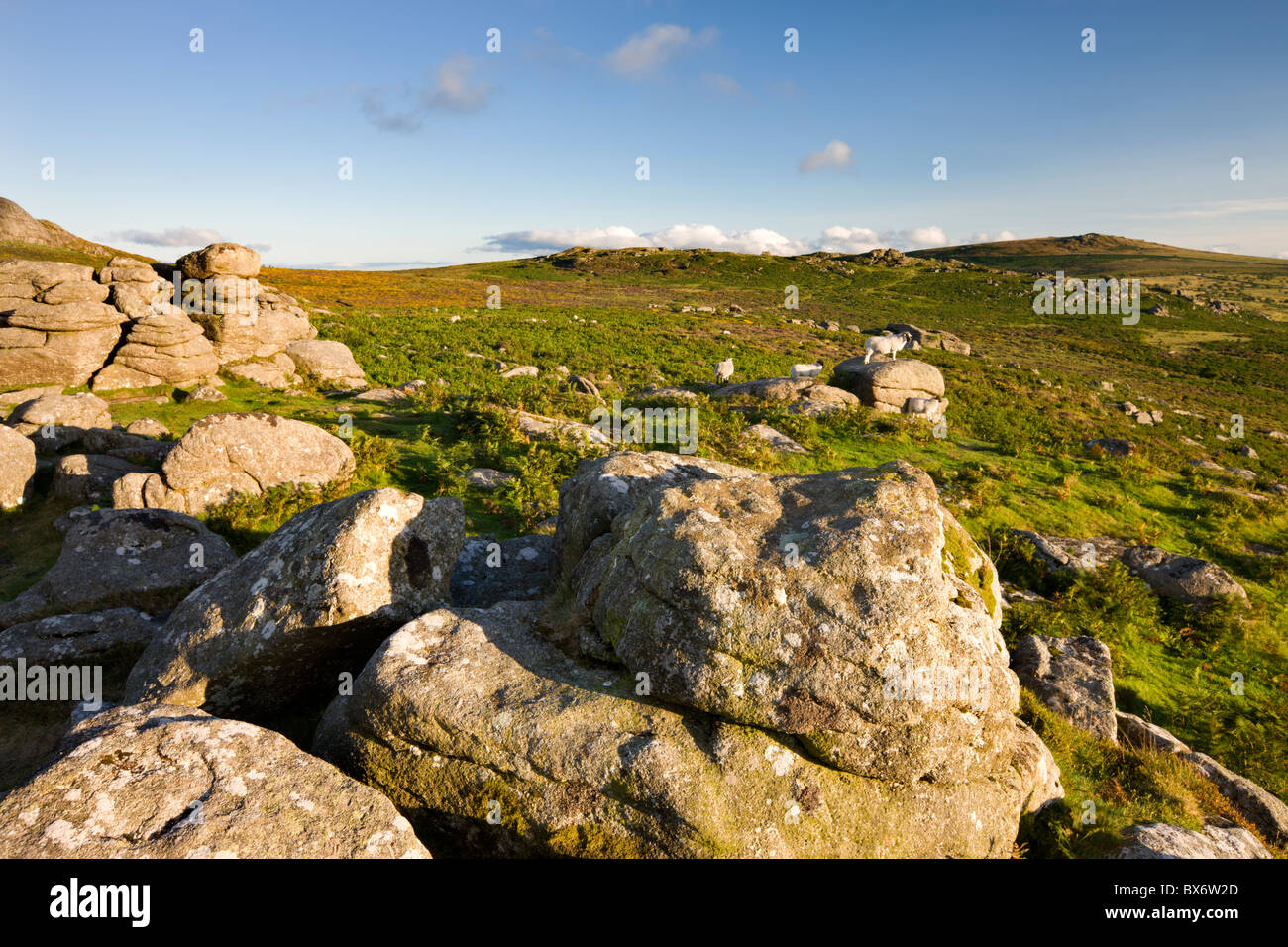 Granite outcrop at Holwell Tor, looking over bracken covered moorland to Saddle Tor, Dartmoor National Park, Devon, - Stock Image