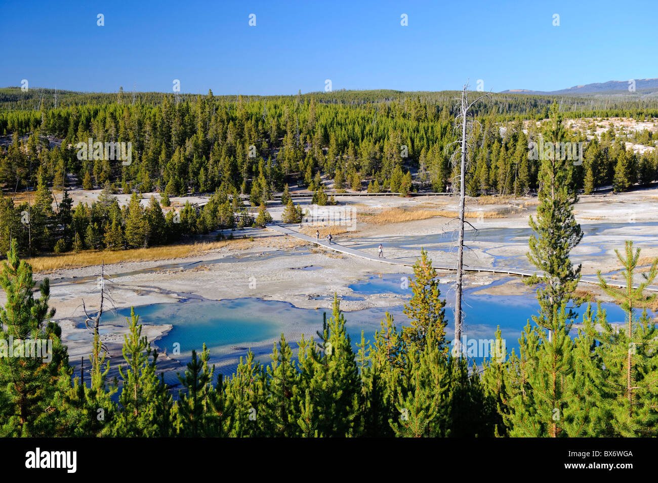 Norris Geyser Basin Yellowstone National Park Wyoming Usa