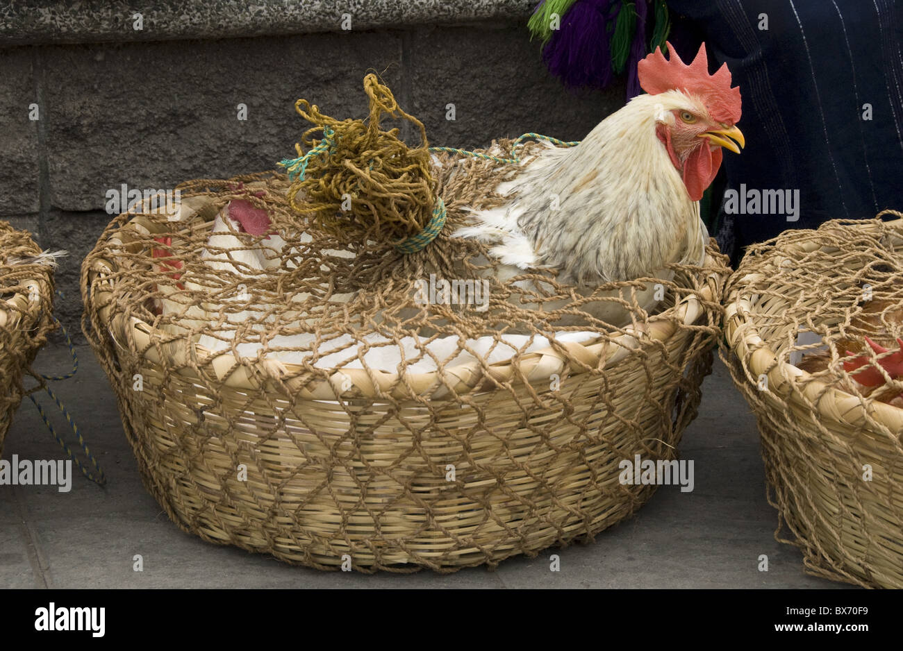 Chickens for sale at the Friday market in the village of Solola, near Lake Atitlan, Guatemala, Central America - Stock Image