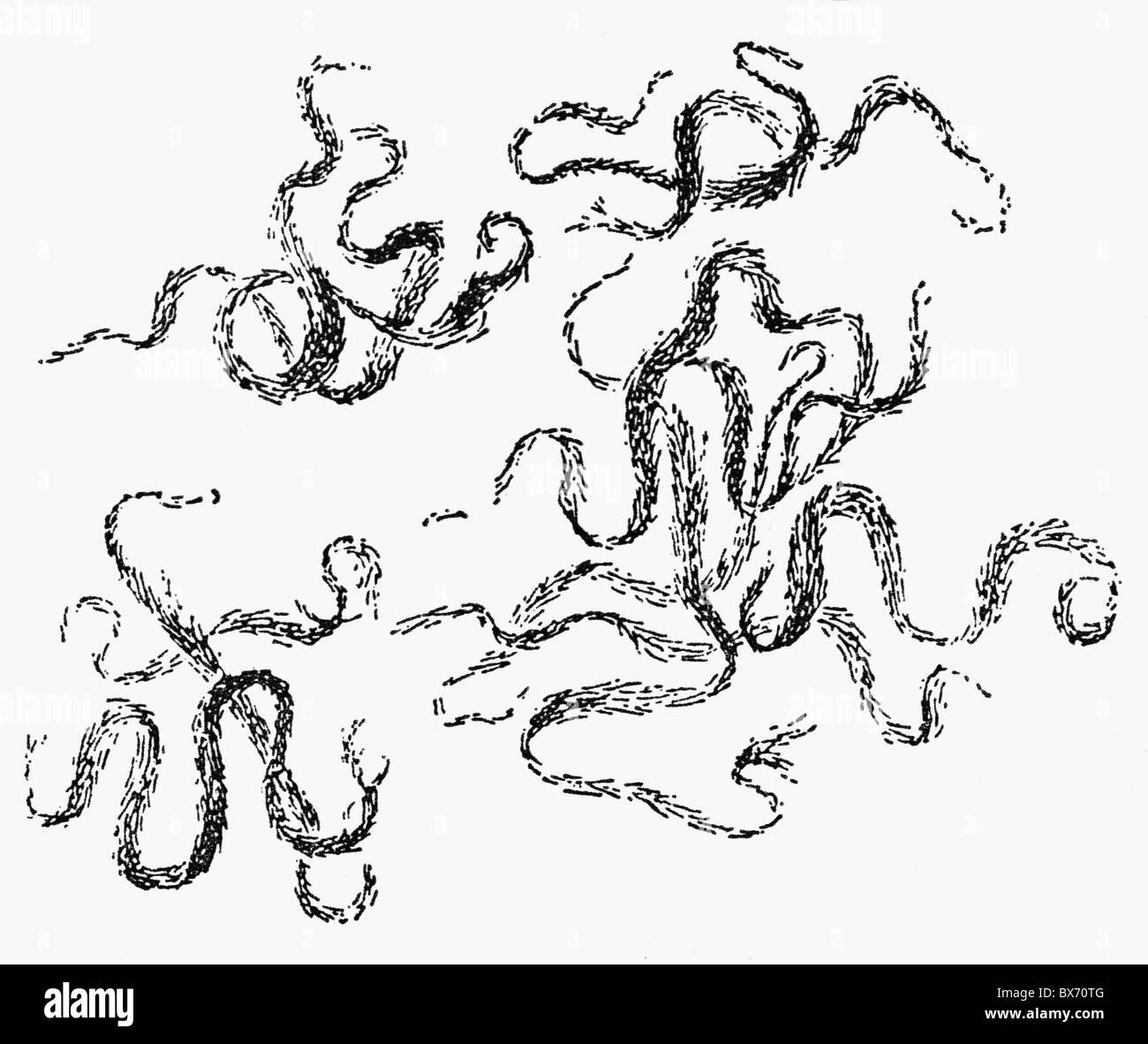 medicine, pandemic diseases, tuberculosis, Mycobacterium tuberculosis (MTB), drawing from the tractate of Robert - Stock Image
