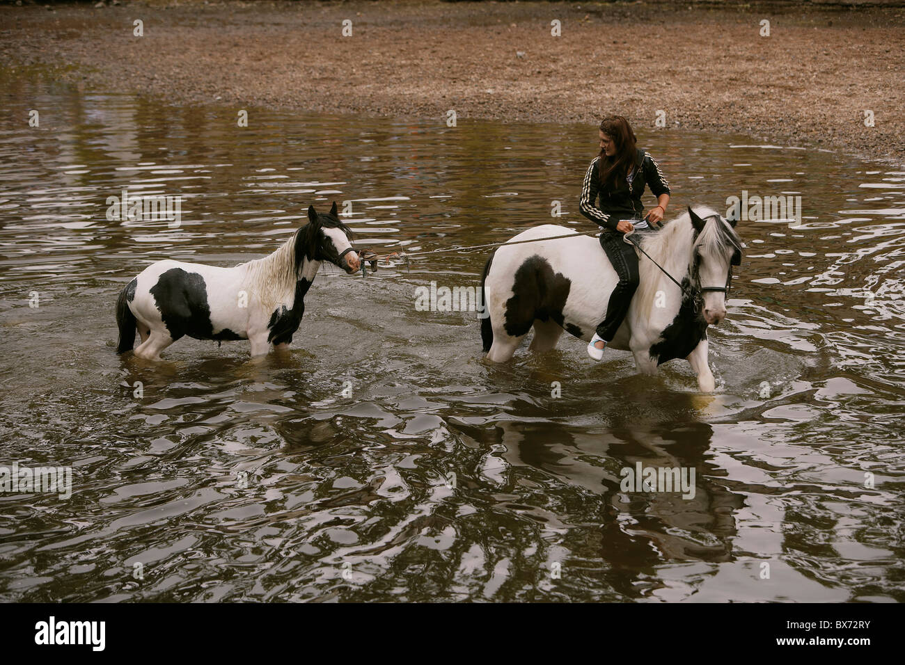 Gypsy travellers riding and washing horses in the river Eden during the Appleby Horse Fair, Appleby-in-Westmorland, - Stock Image