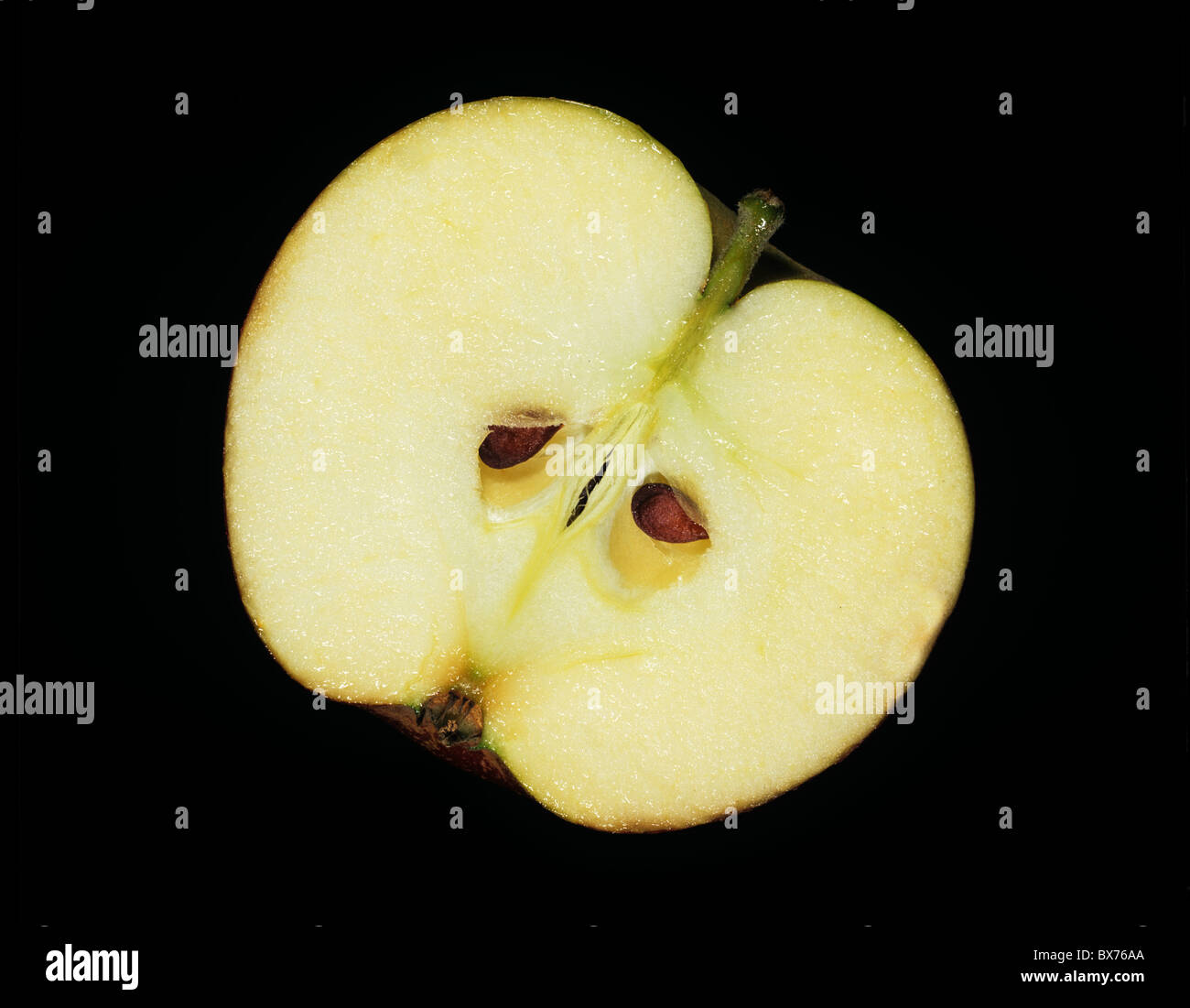 Longitudinal section through and apple to show its structure - Stock Image