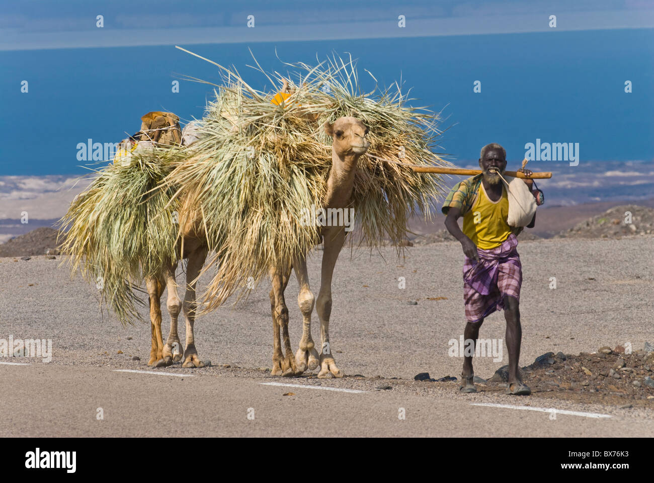 Afar tribesman with his camels on his way home, Tadjoura, Republic of Djibouti, Africa - Stock Image