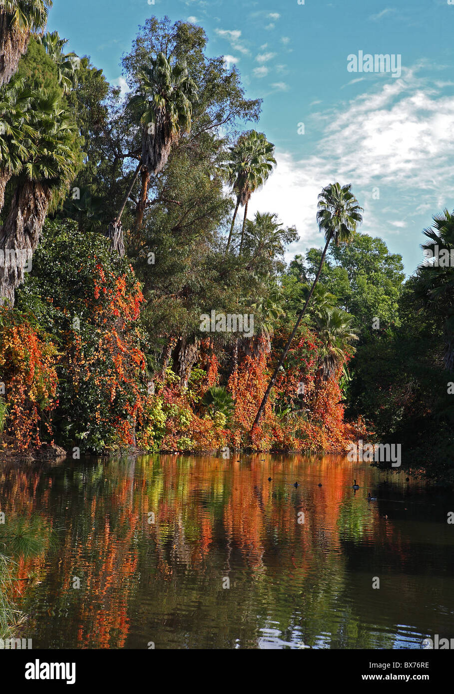 Colorful reflecting Fall pond with trees in California in December - Stock Image