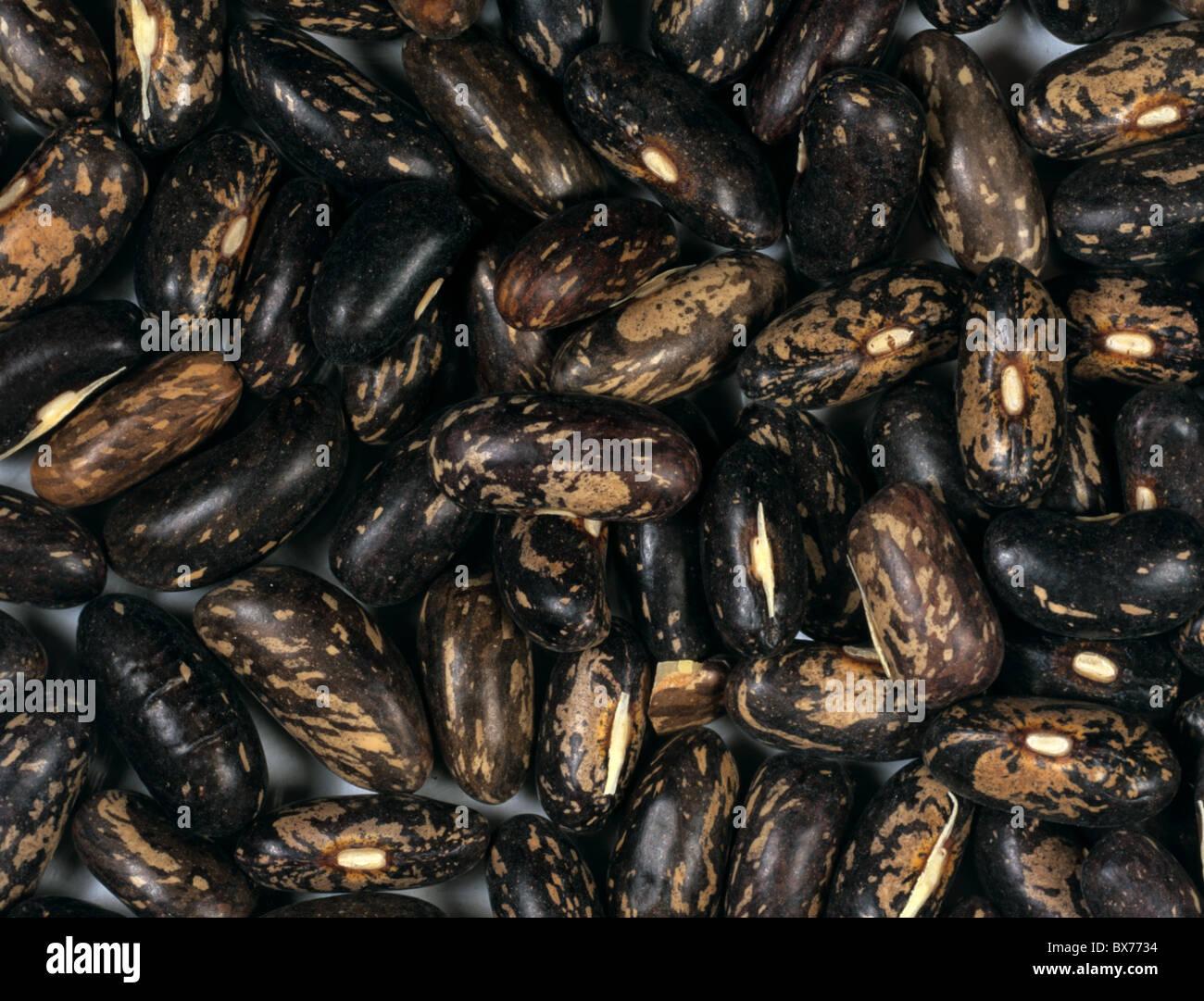 Dwarf bean (Phaseolus vulgaris) seeds - Stock Image