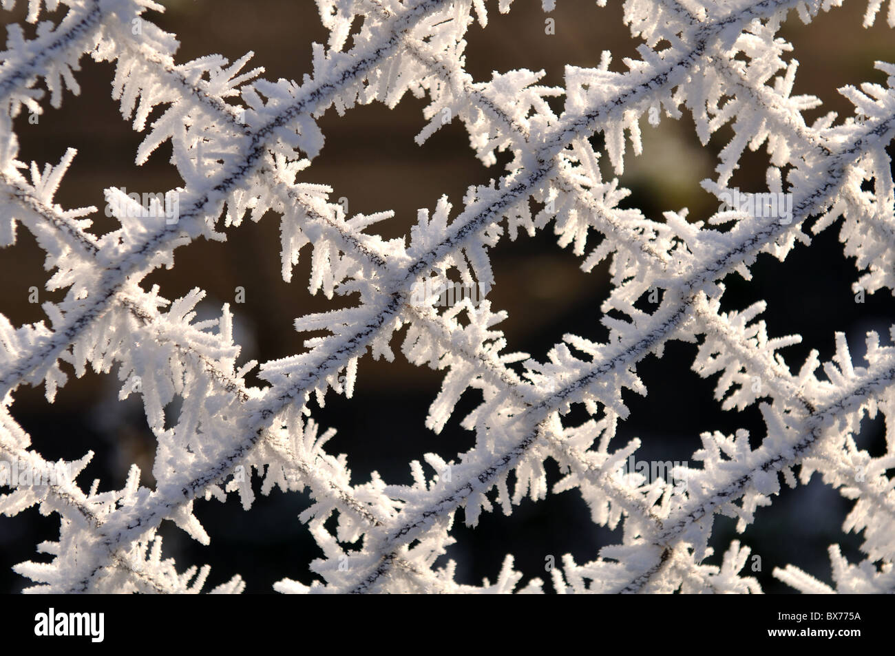 Hoar frost on chain-link fencing - Stock Image
