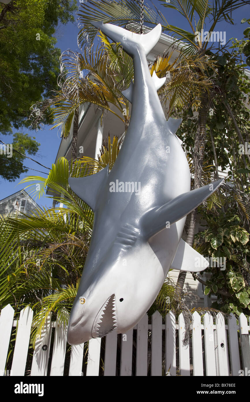 Fake shark hanging downward in Key West, Florida, United States of America, North America - Stock Image