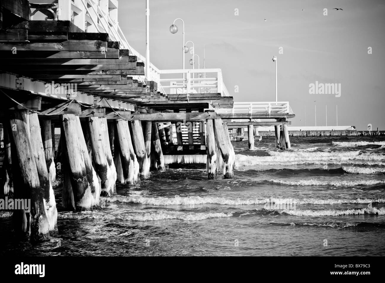 birds at wooden pier, Sopot, Poland - Stock Image