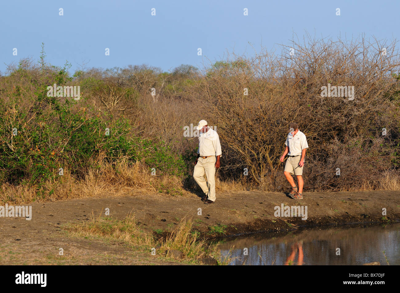 Park ranger and tracker looking for animal track around a water hole. Kruger National Park, South Africa. - Stock Image