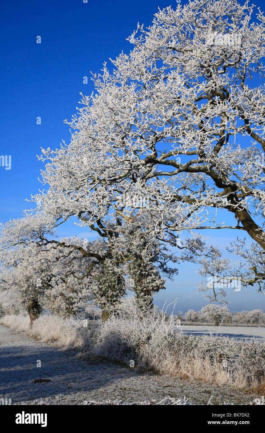 Hoar Frost on Trees Wales UK United Kingdom Europe - Stock Image