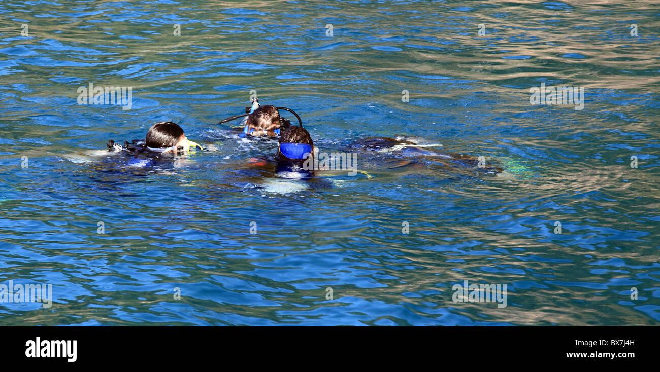 Divers submerge. - Stock Image