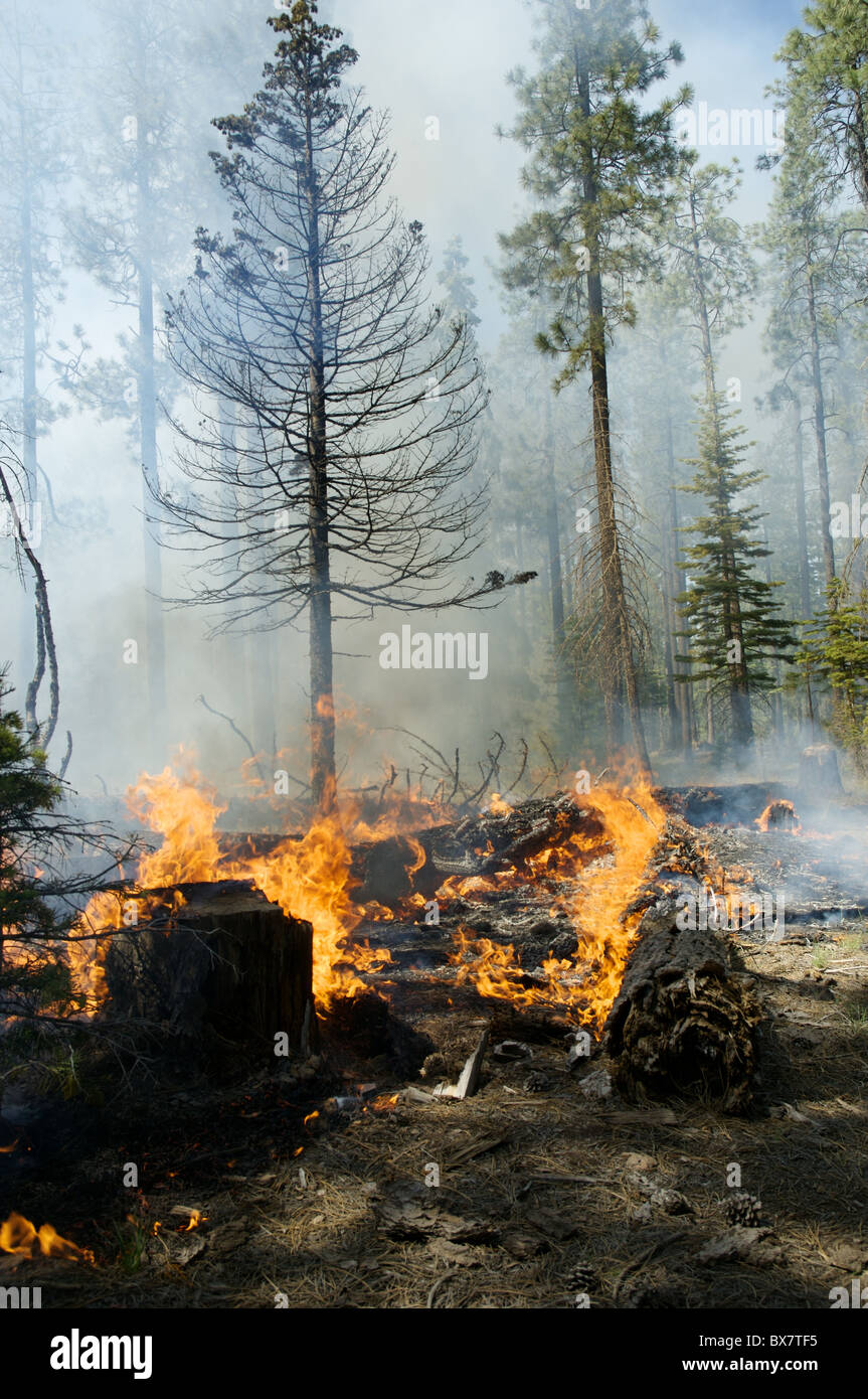 A small fire burns in a forest in the western United States. - Stock Image
