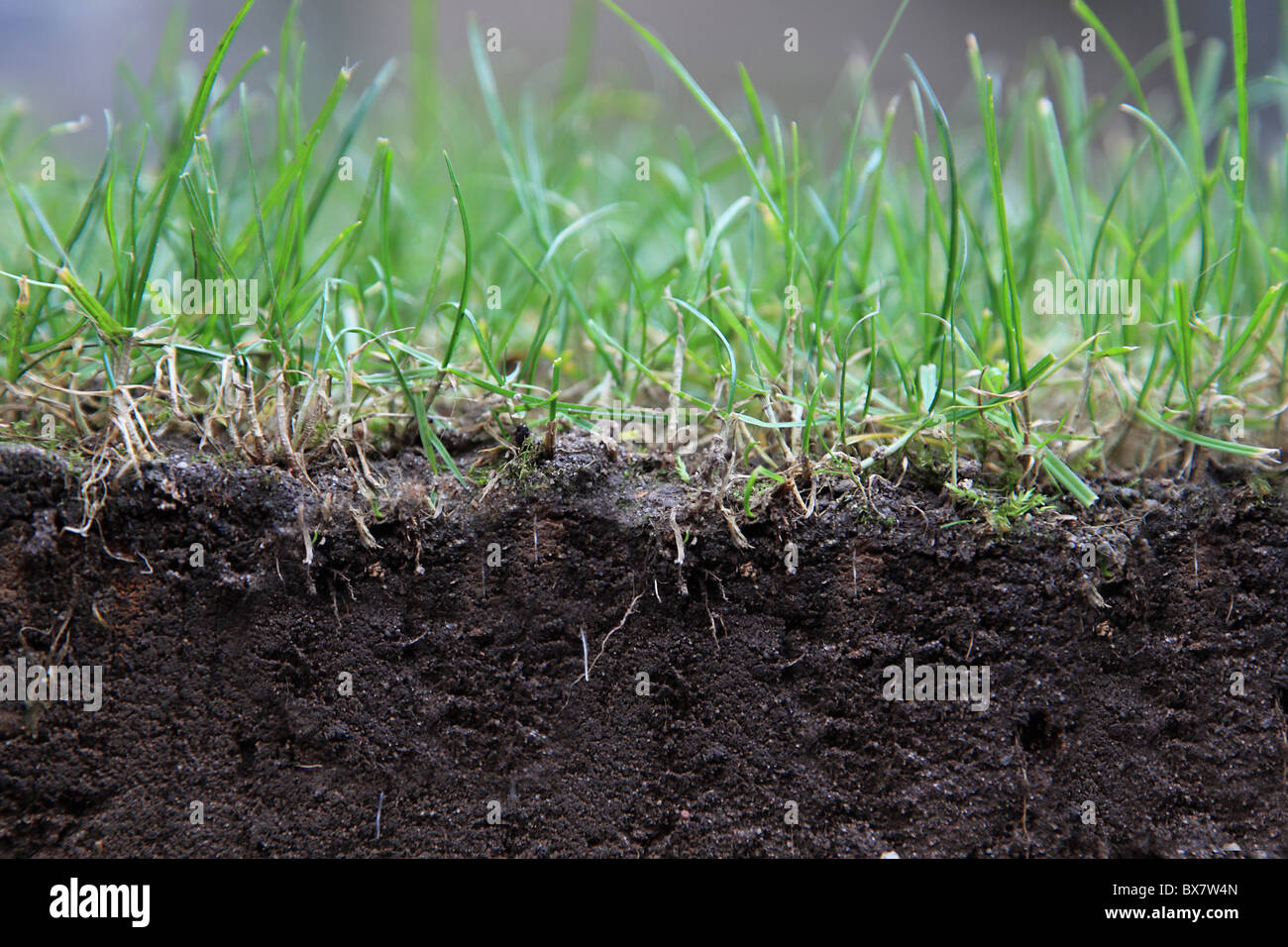 Profile of lawn and ground. - Stock Image
