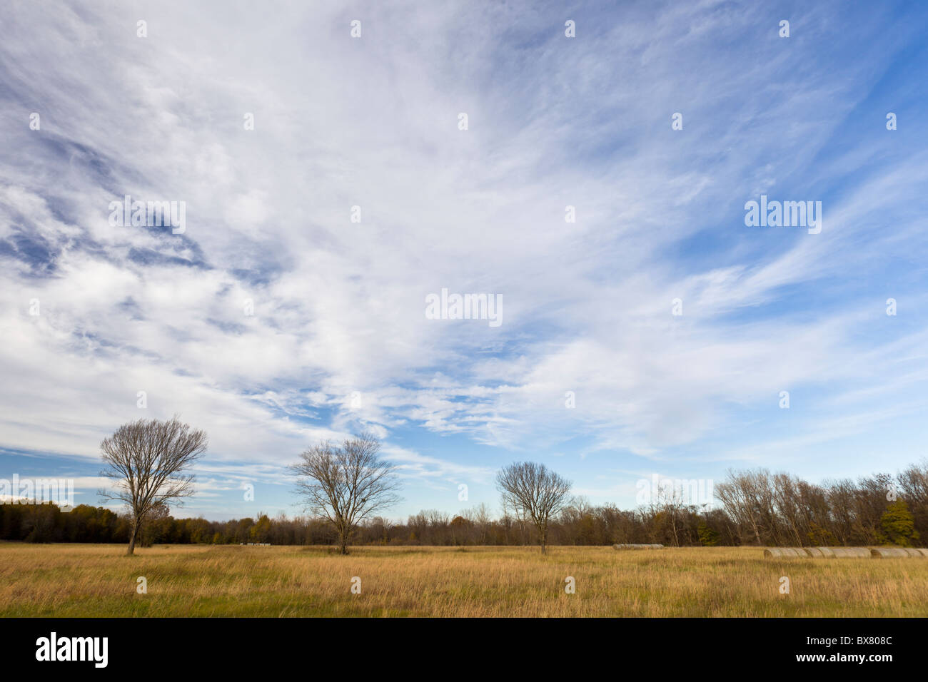 Row of barren trees and wild grass during late winter at the Spiro Mounds Archeological Site in Oklahoma, USA. - Stock Image