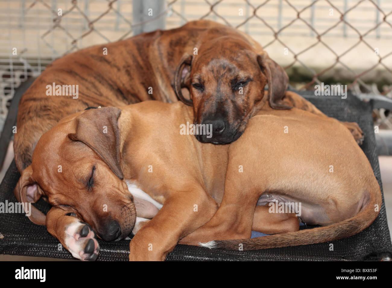 Cute Sleeping Beauties - Stock Image