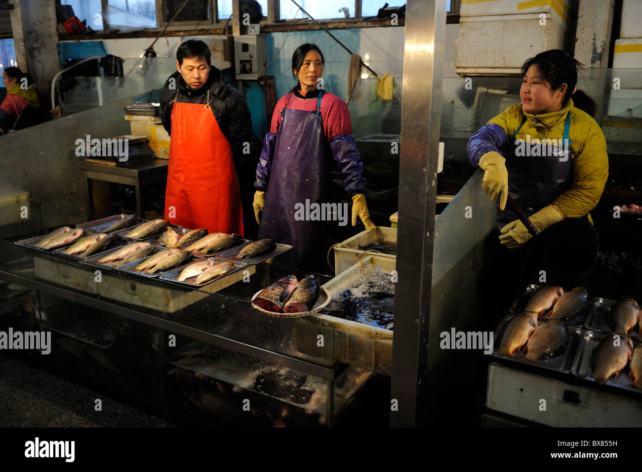 Vendors sell live river fishes at a market in Beijing, China. 10-Dec-2010 - Stock Image