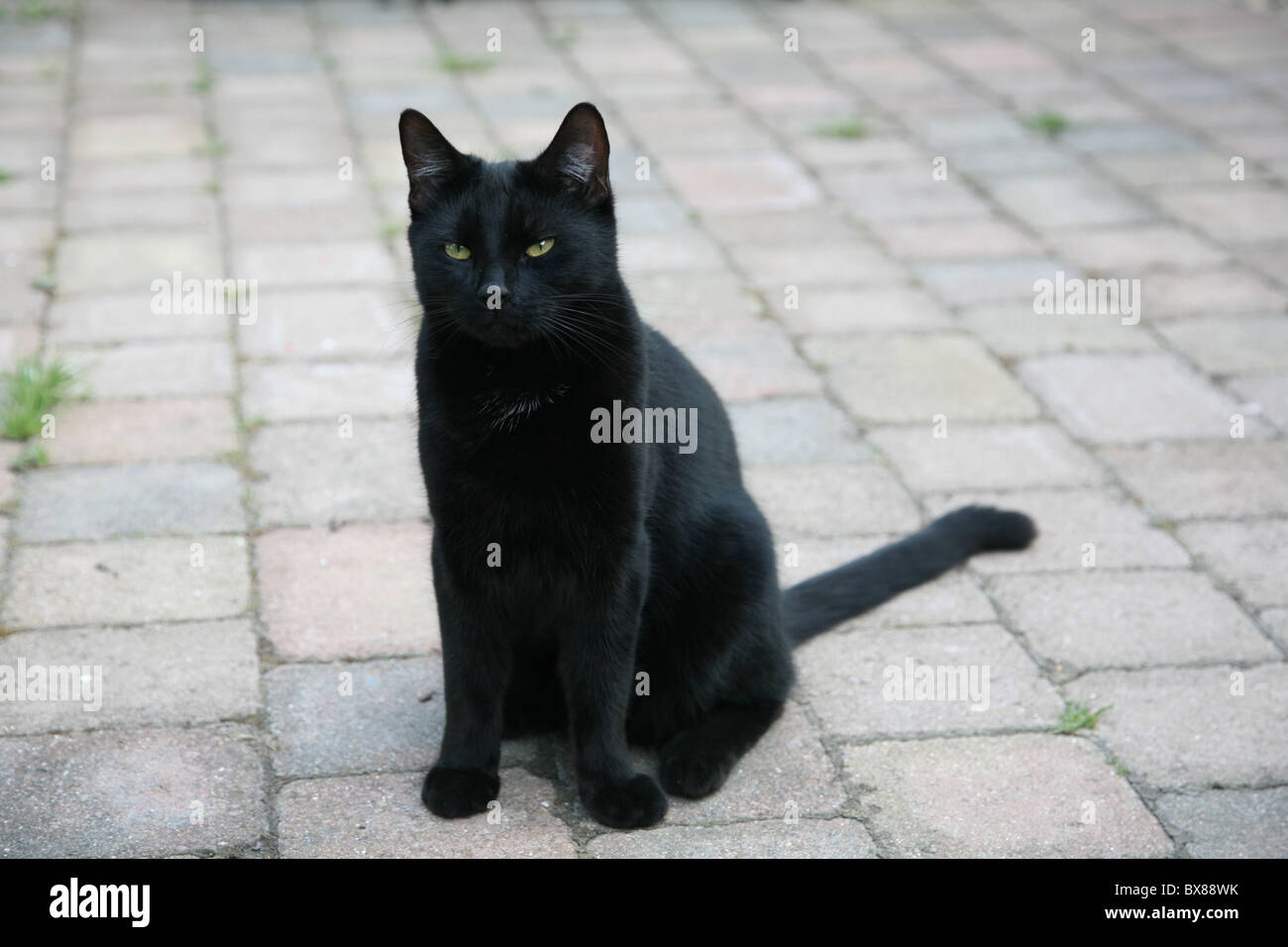 A black cat sits on a pavement looking off camera - Stock Image