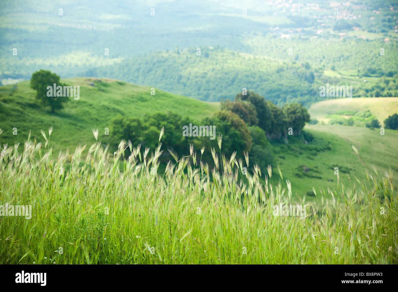 Grass field landscape - Stock Image
