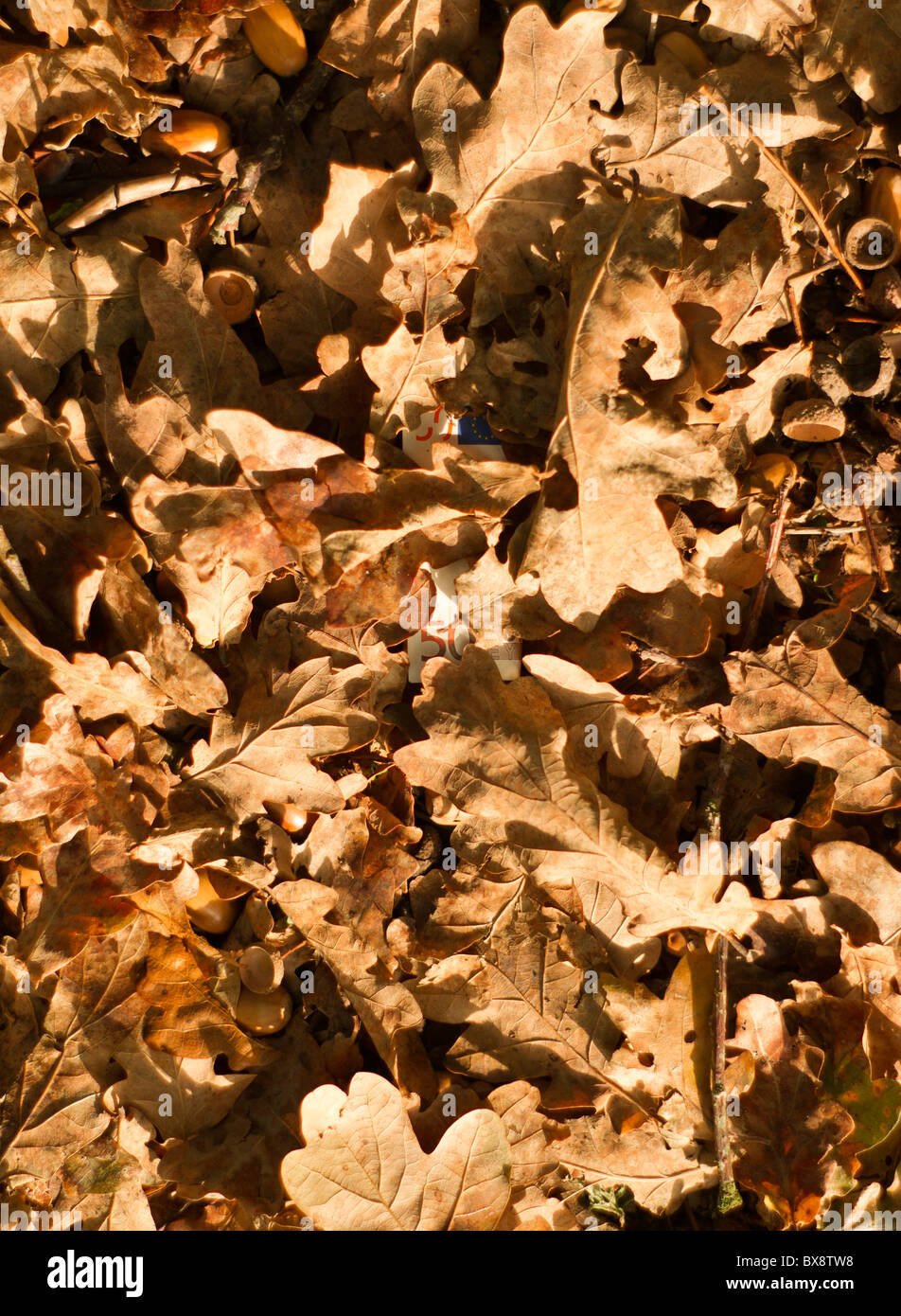 Autumn leaves with concealed fifty Euro note - Stock Image