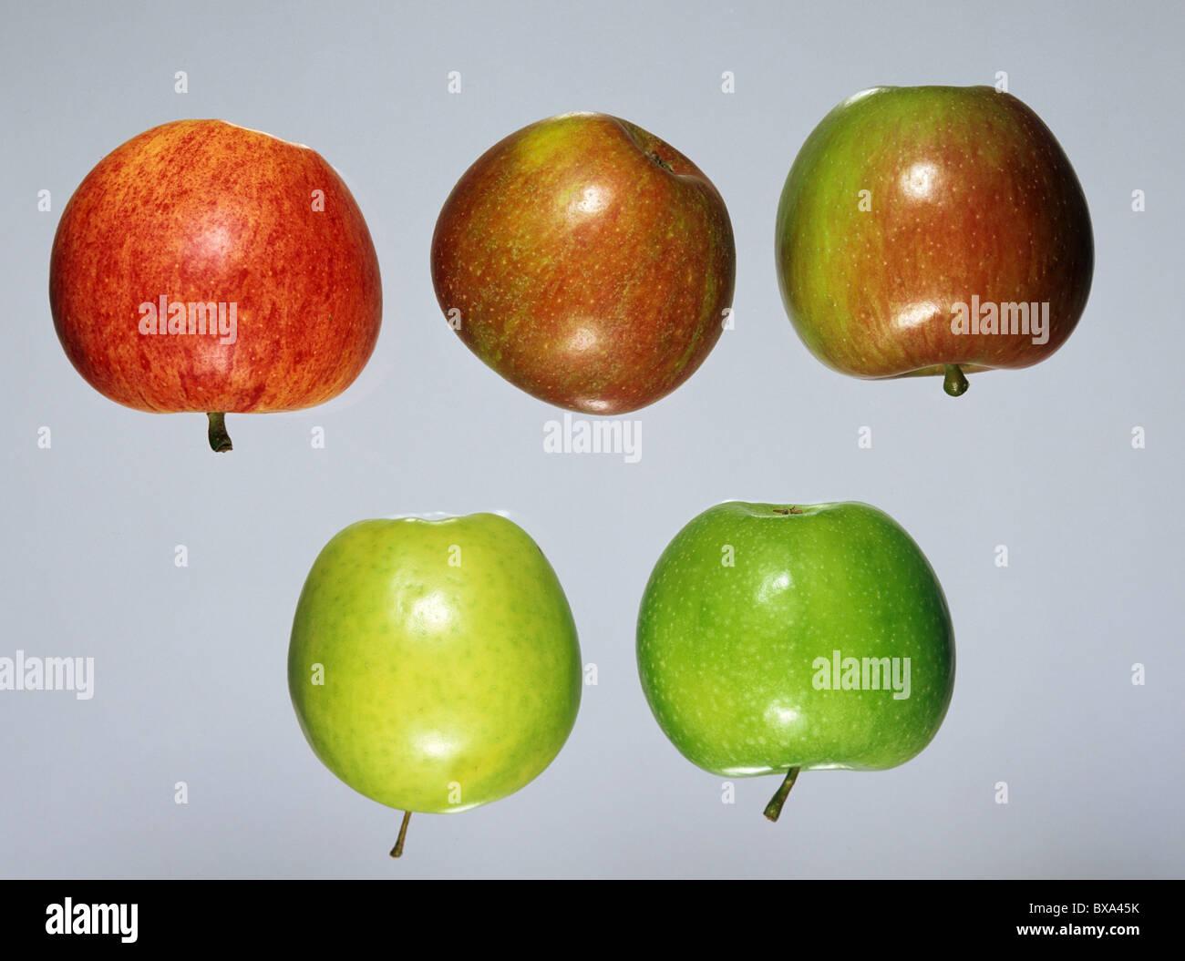 Eating apple fruits: Gala, Cox, Braeburn, bottom Golden Delicious, Granny Smith - Stock Image