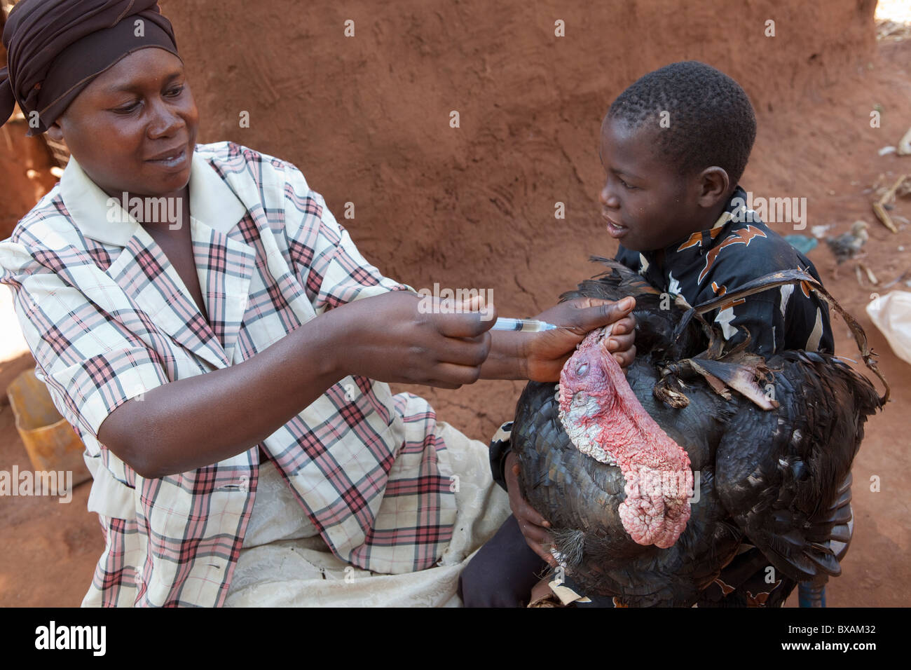 A boy brings his turkey to a community vaccination day in Nampikika Village, Iganga District, Eastern Uganda, East - Stock Image