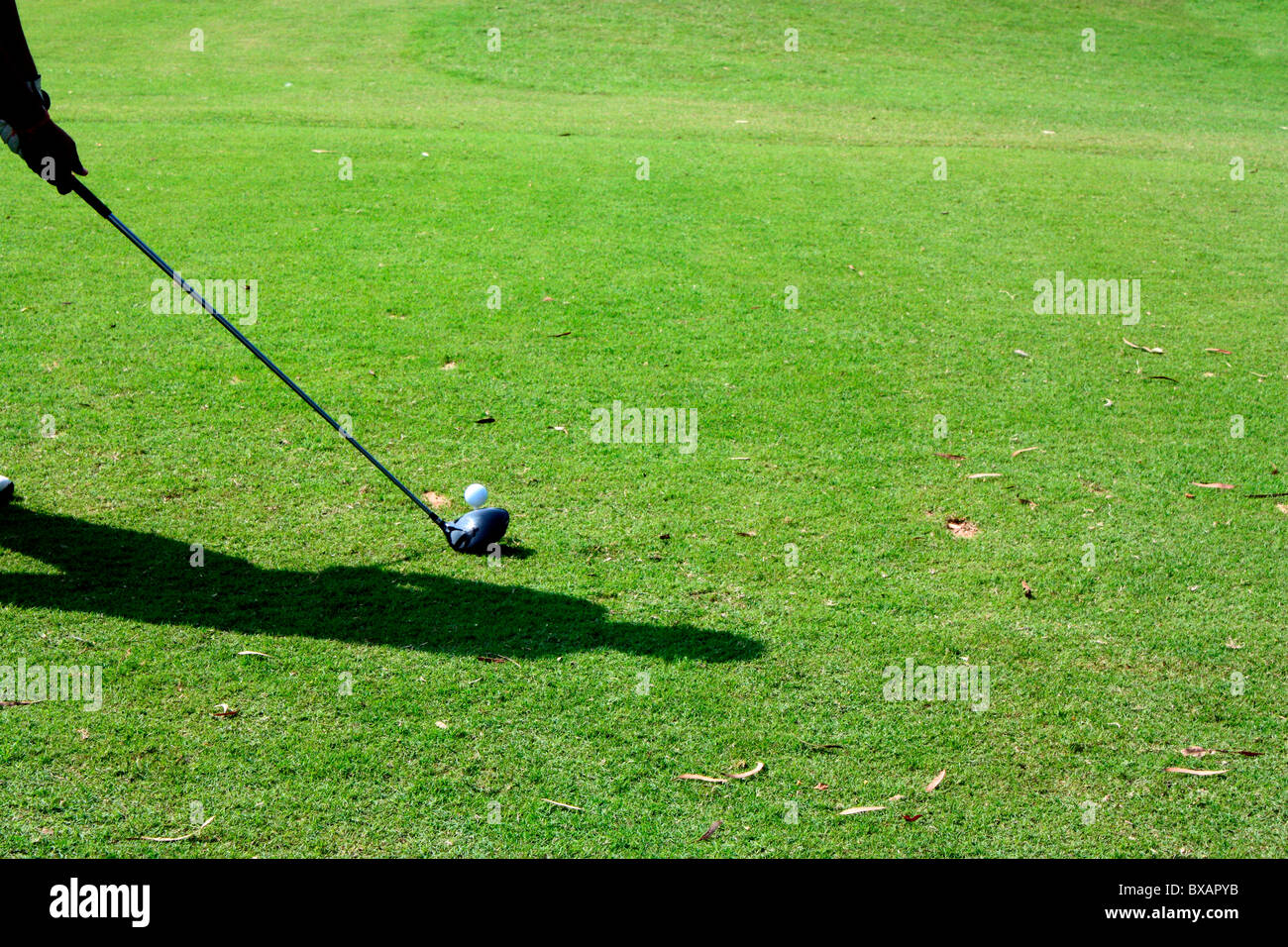 A golfer tee offing with a driver - Stock Image