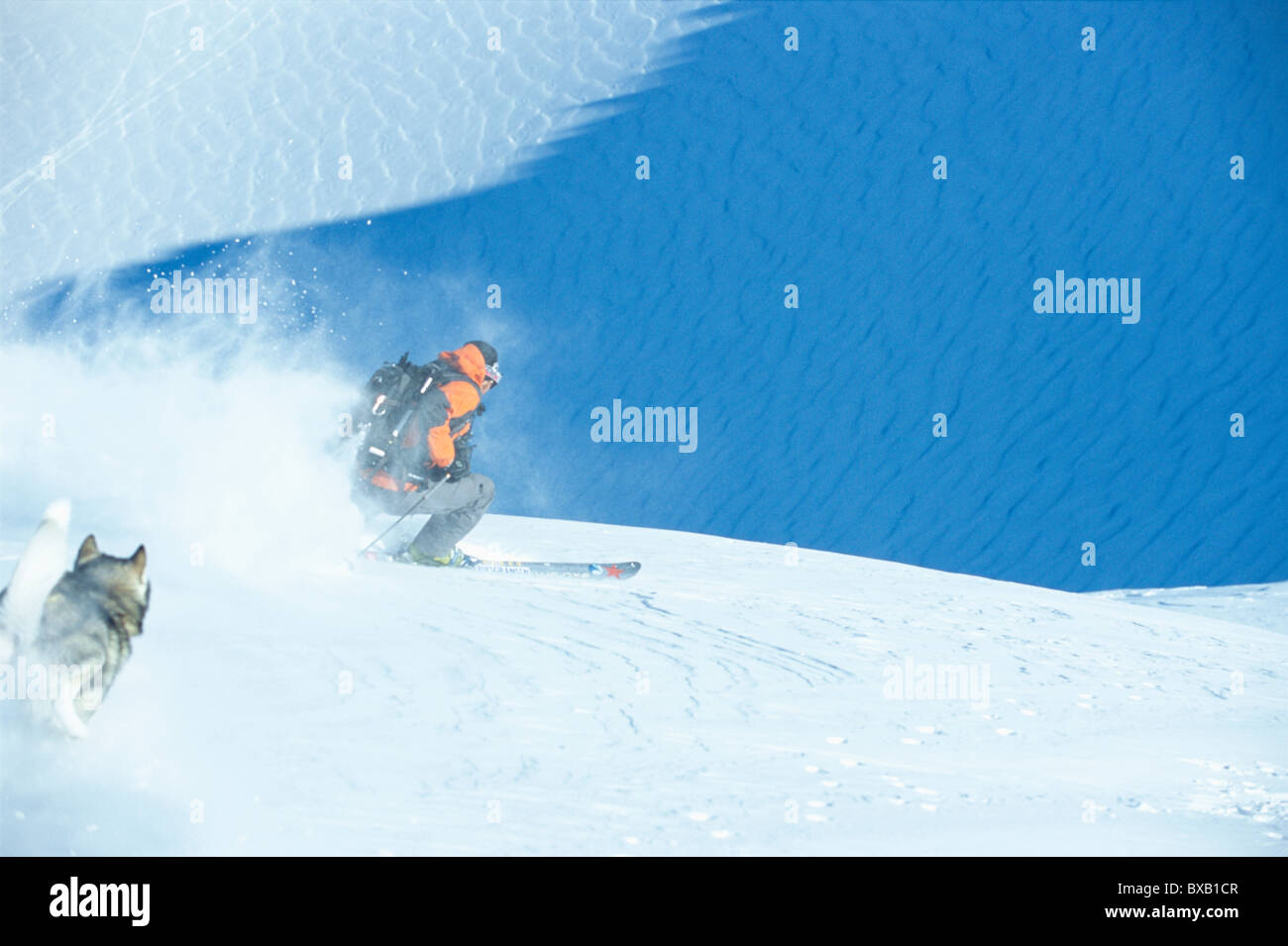 Husky running down hill after skier - Stock Image