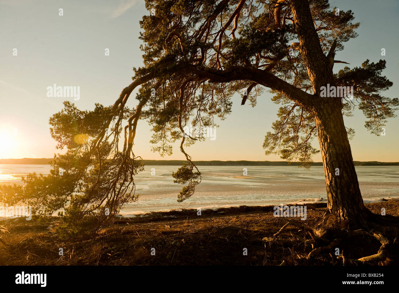 View of tree beside lake at dusk - Stock Image