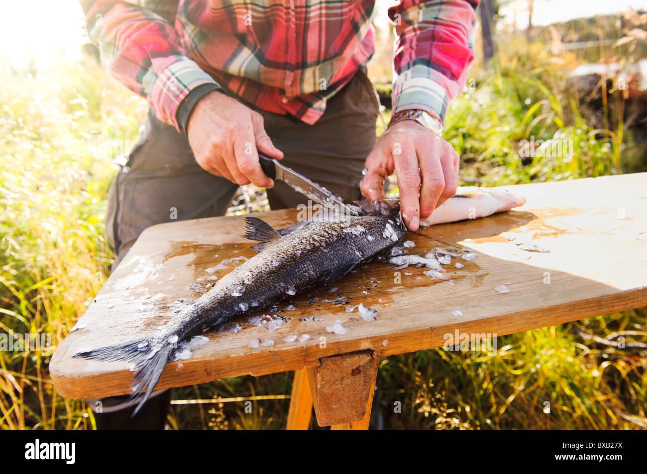 Senior man preparing fish - Stock Image