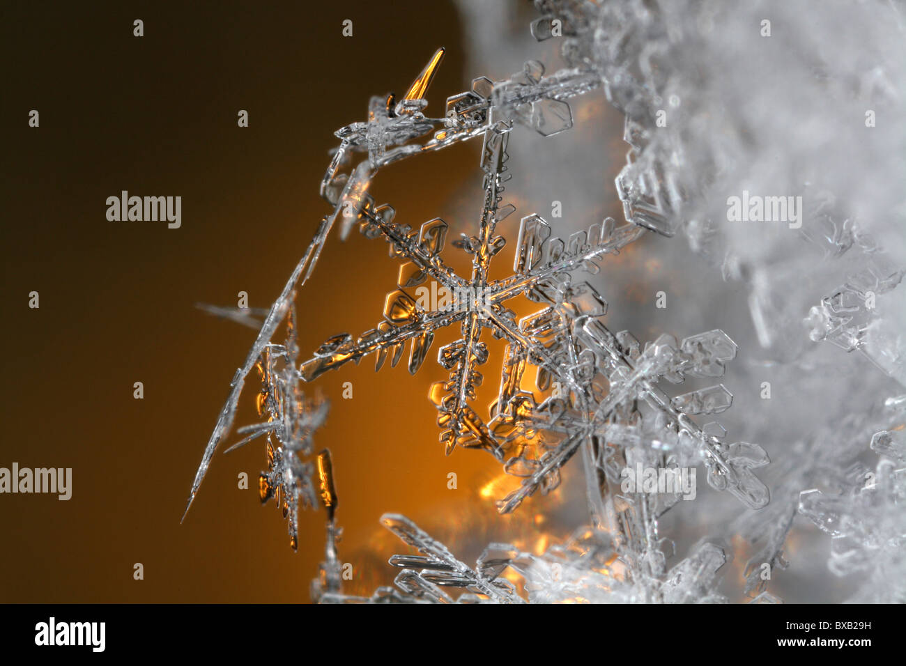 Snow flakes, extreme close-up - Stock Image