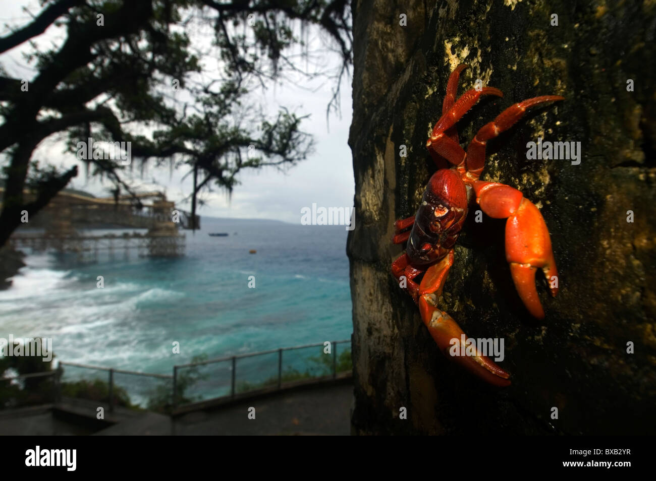 Red crab (Gecarcoidea natalis) and view of phosphate loader at Flying Fish Cove, Christmas Island Stock Photo