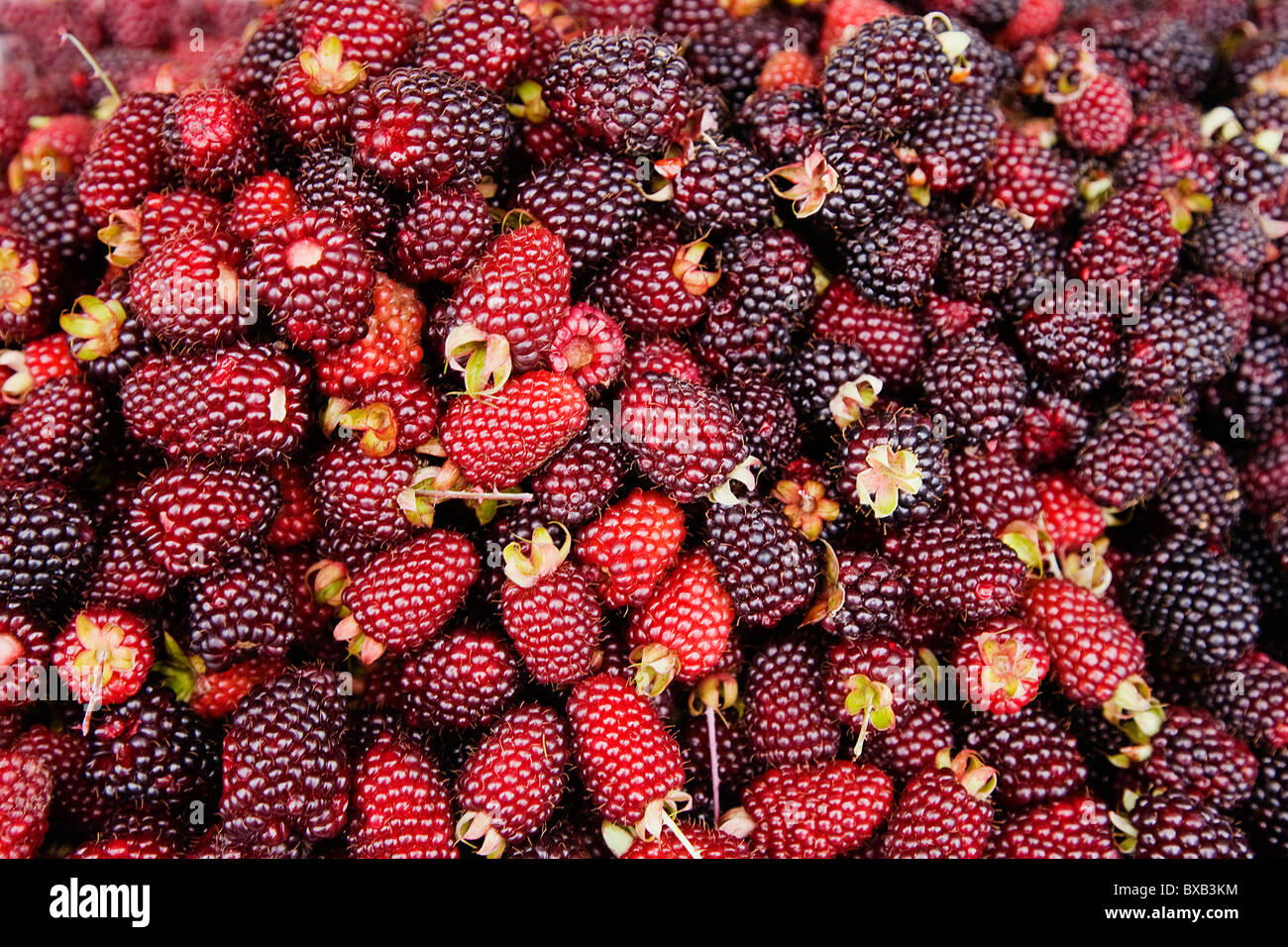 Fresh blackberries, full frame - Stock Image