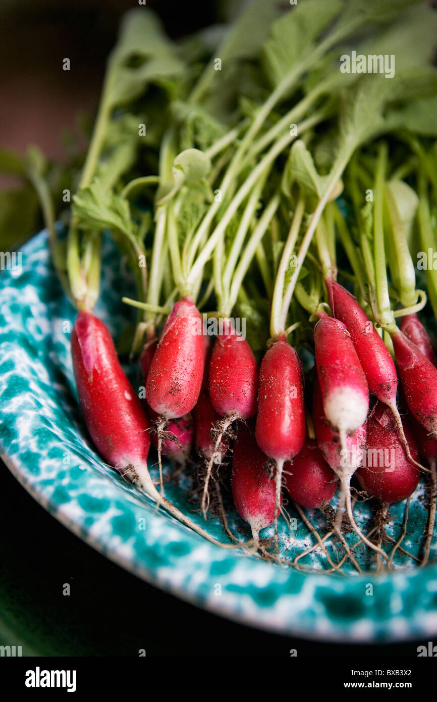 Fresh radish on plate Stock Photo