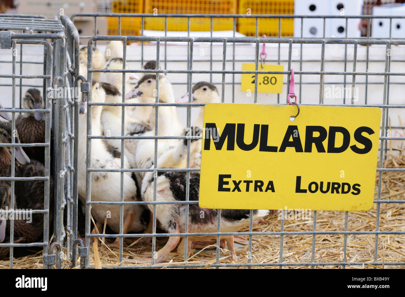 Stock photo of Poultry for sale on market stalls at the Les Herolles farmers market in the Limousin region of France. - Stock Image