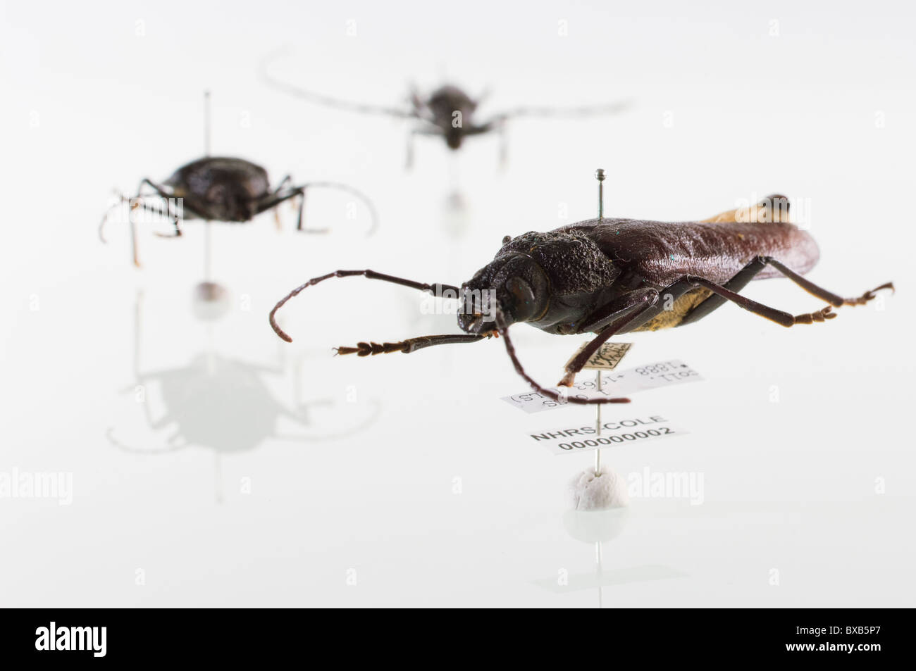 Studio shot of bug specimens on white background Stock Photo