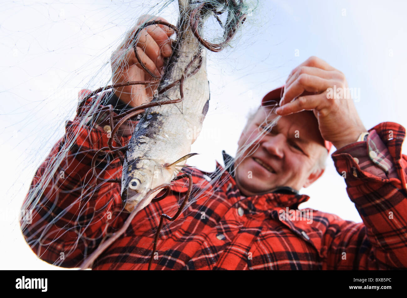 Fisherman taking out fish from fishing net - Stock Image