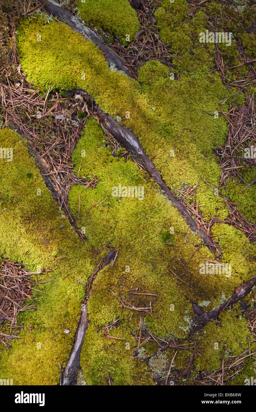 Moss and branches - Stock Image
