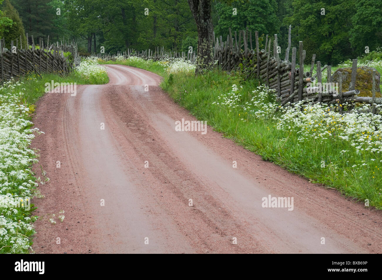 Dirt road through woods in summer - Stock Image