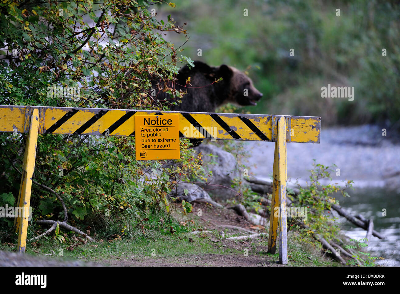 Sign, blocked because of risk of brown bears, Bella Coola, British Columbia, Canada Stock Photo
