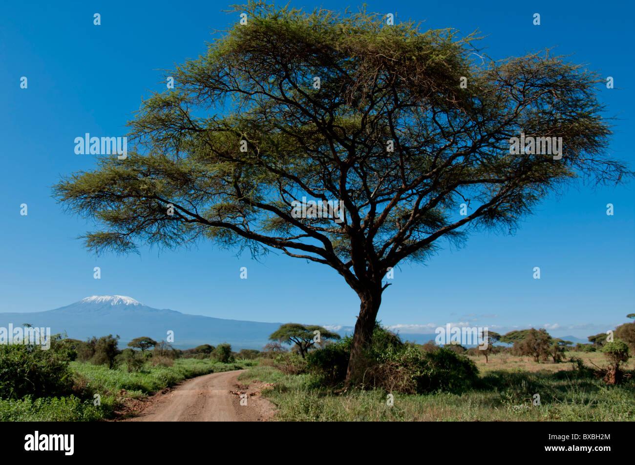 East Africa, Kenya, Amboseli, road Kilimanjaro - Stock Image