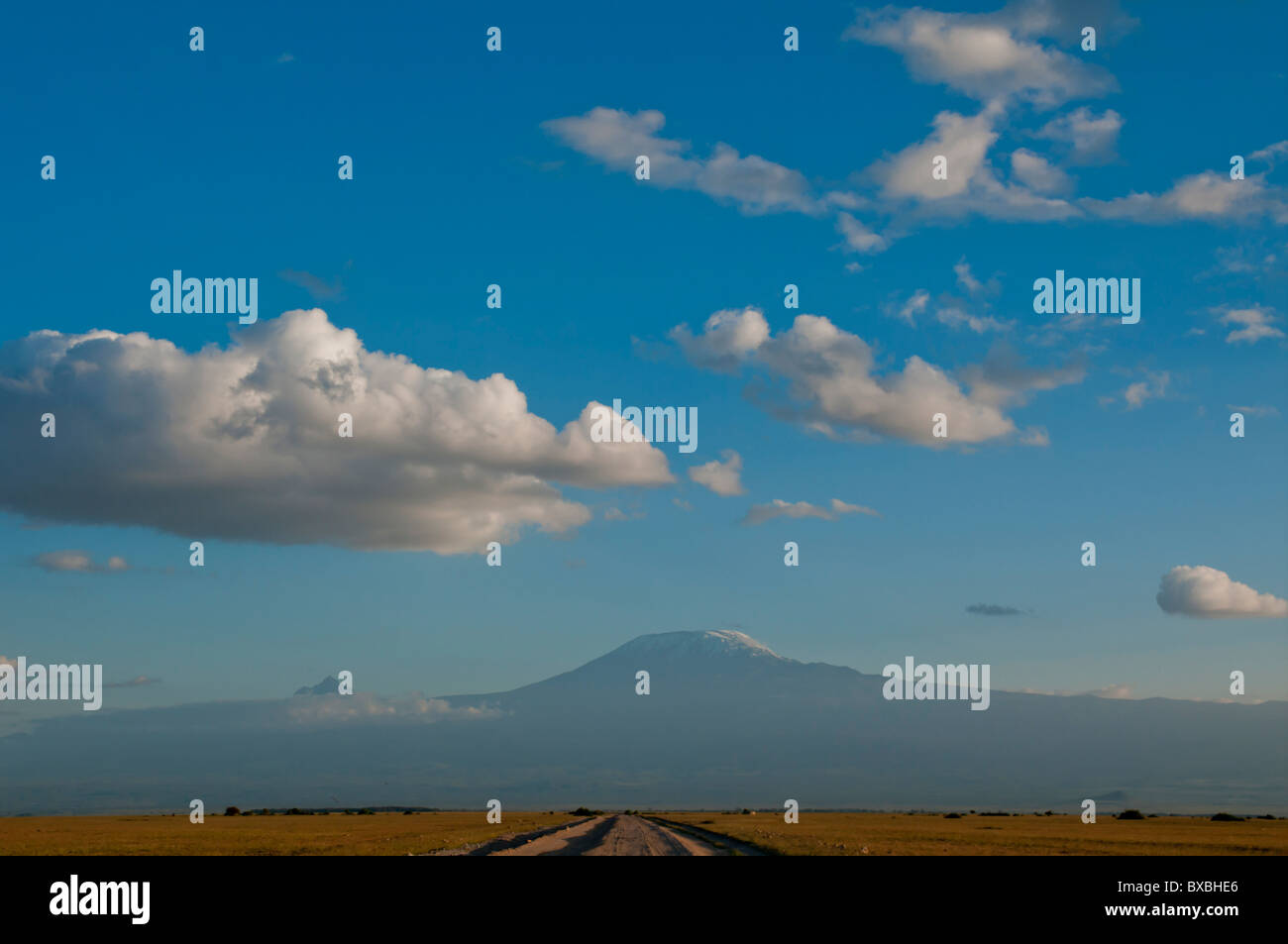 Kenya, Amboseli, Kilimanjaro, view landscape - Stock Image