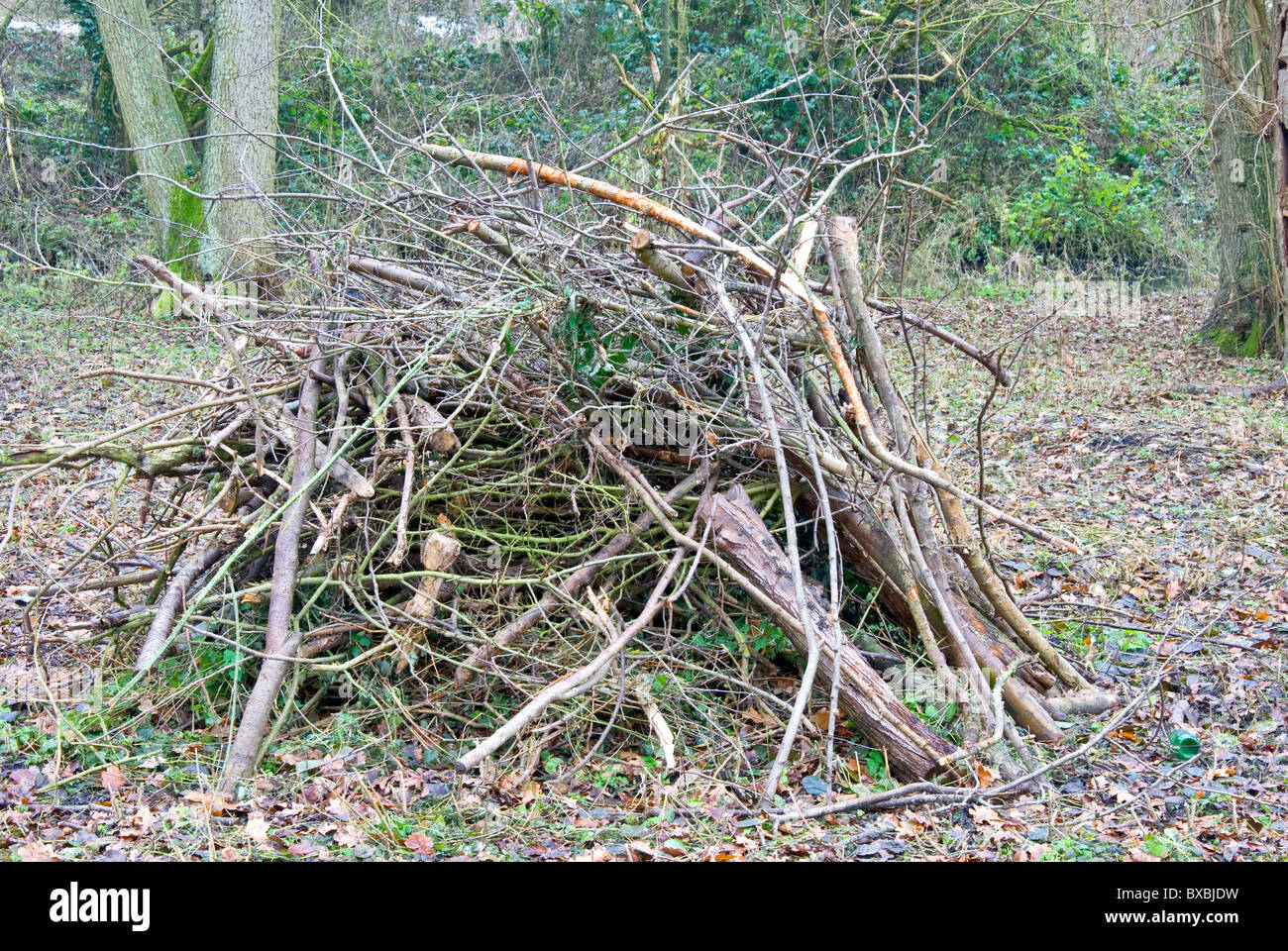 Pile of twigs and branches - Stock Image