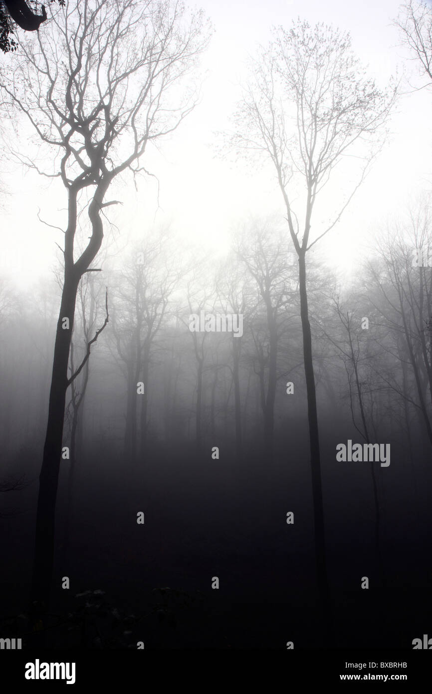 Tree, without leaves, blad, in autumn, thick fog. - Stock Image