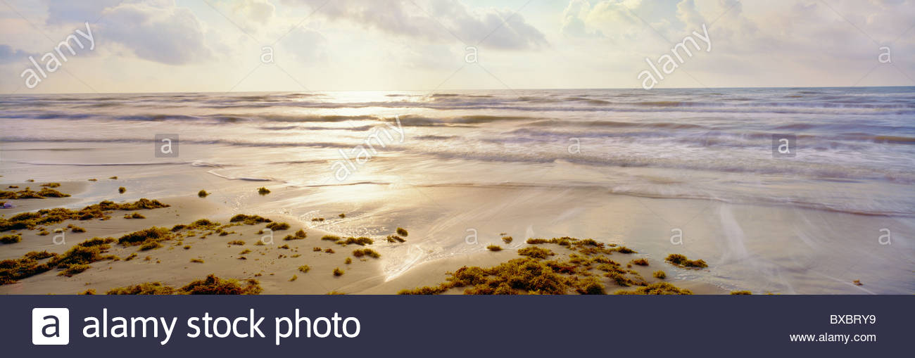 Gulf beach, morning, with sargassum. Padre Island National Seashore, Texas. - Stock Image