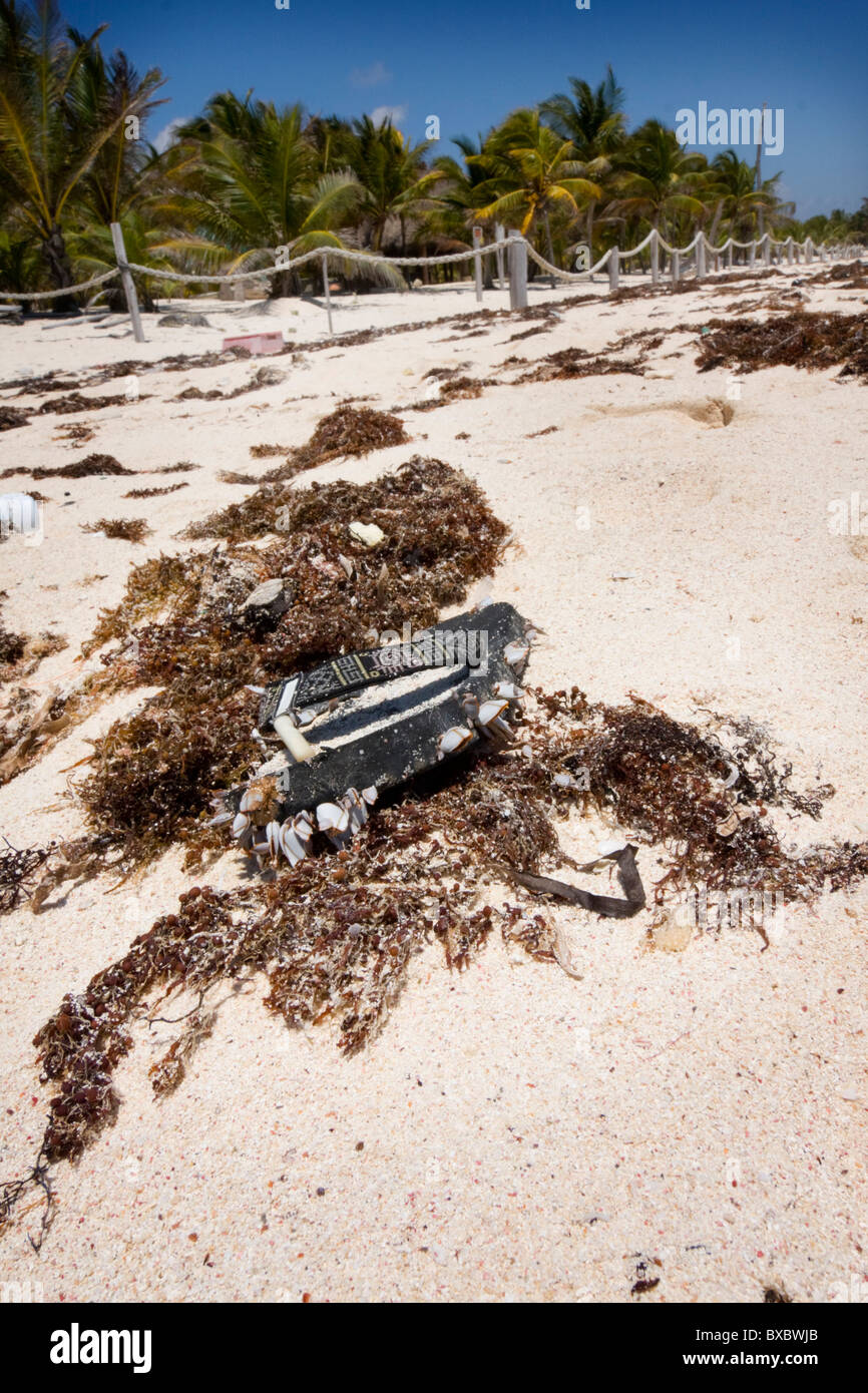Weathered sandal that has washed up onto sandy Mexico beach tangled in sea weed. - Stock Image