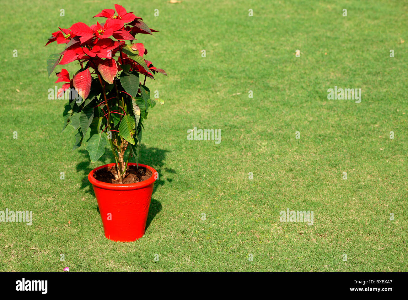 A red flower pot in green lawn - Stock Image