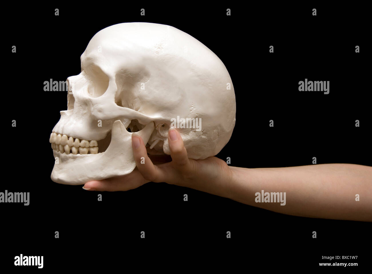 woman hand holding a human skull, to be or not to be concept - Stock Image